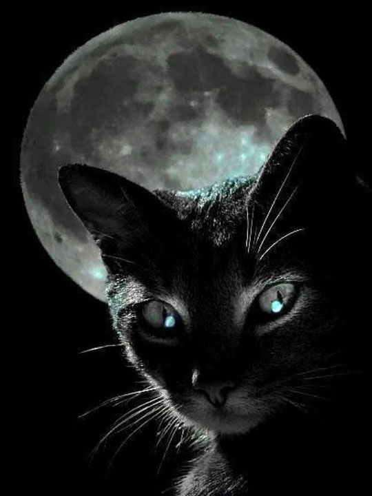 Cat and the full Moon