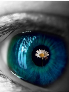 Chamomile in the eye