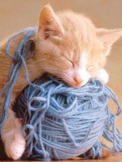 Sleeping on a yarn ball