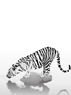 Drawn tiger