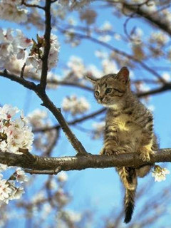 Scared kitten on a tree