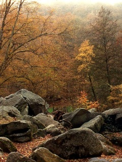 Autumn forest and stones