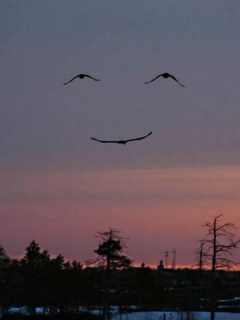 Smile of nature