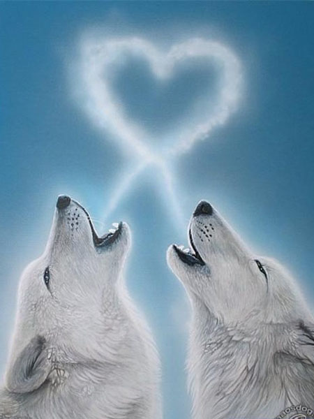 Howl of love