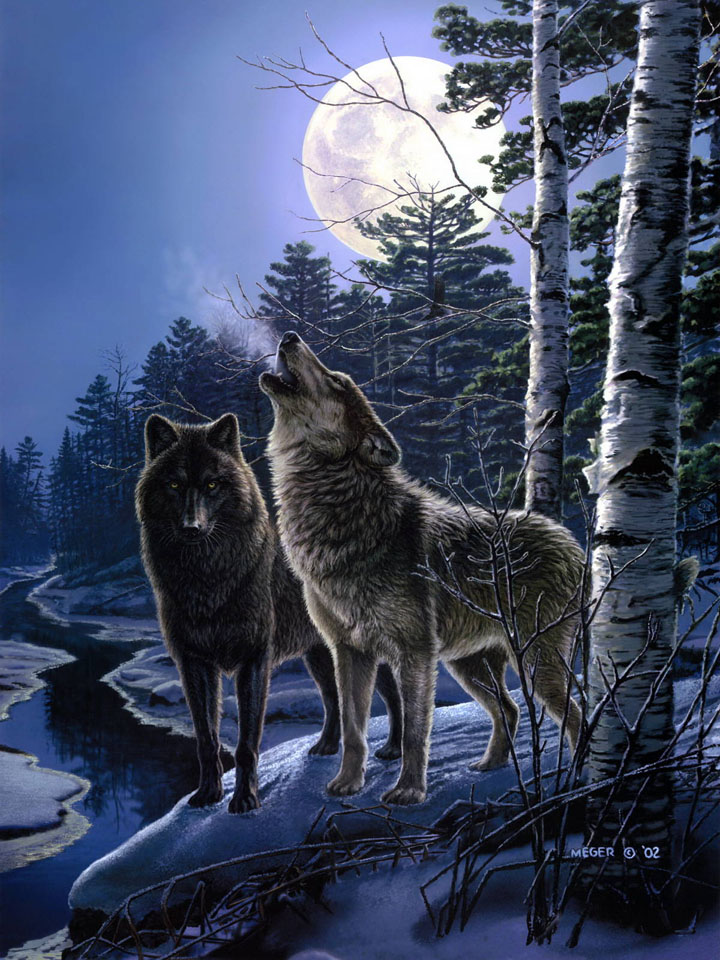 Couple of wolves under the Moon