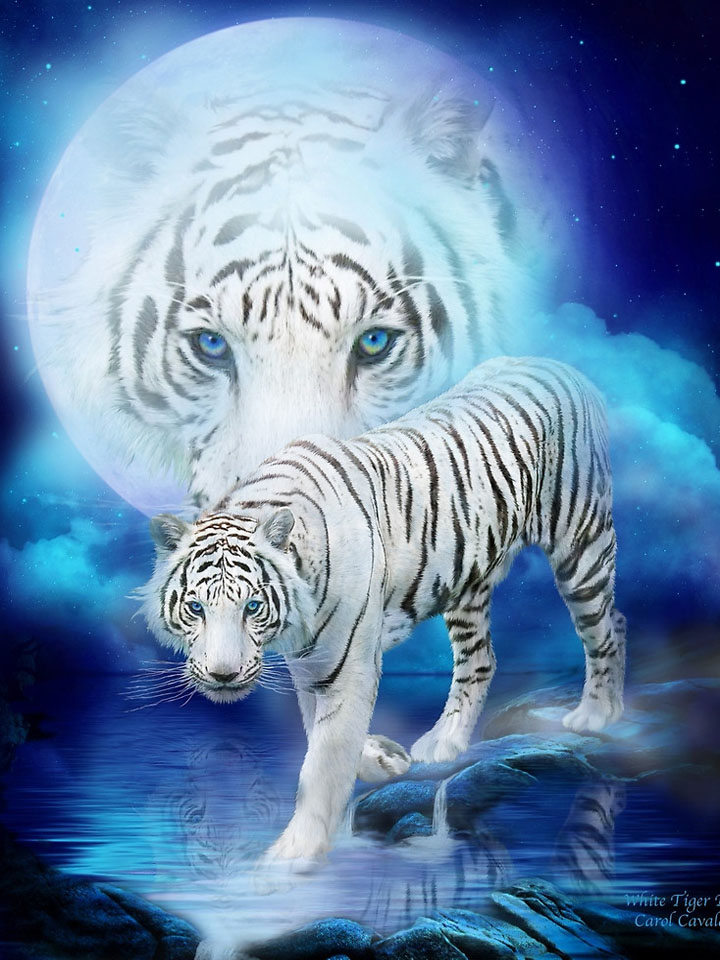 Bengal tiger and Moon