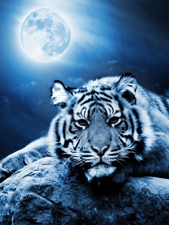 Tiger under the Moon
