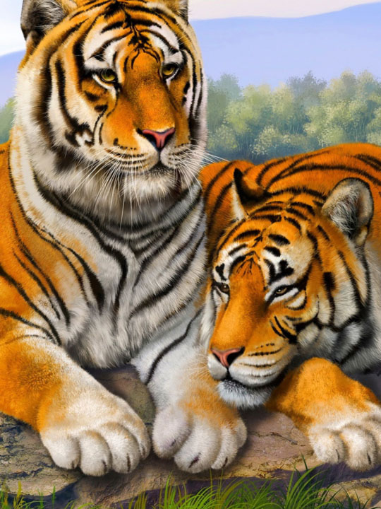 Tiger friends