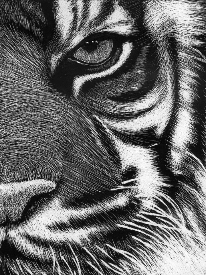Black and white tiger photo