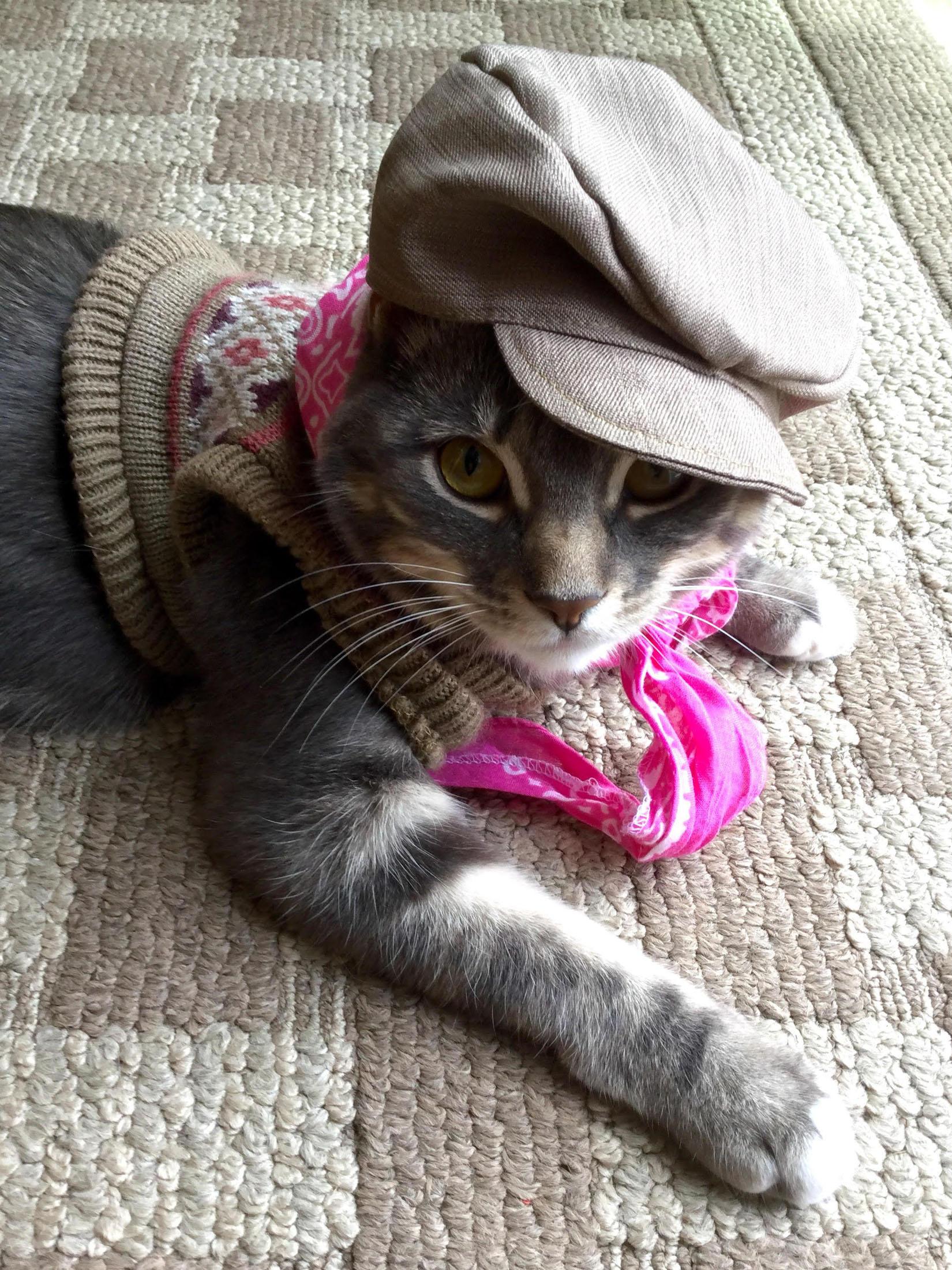 коты в кепках картинки один семейный праздник