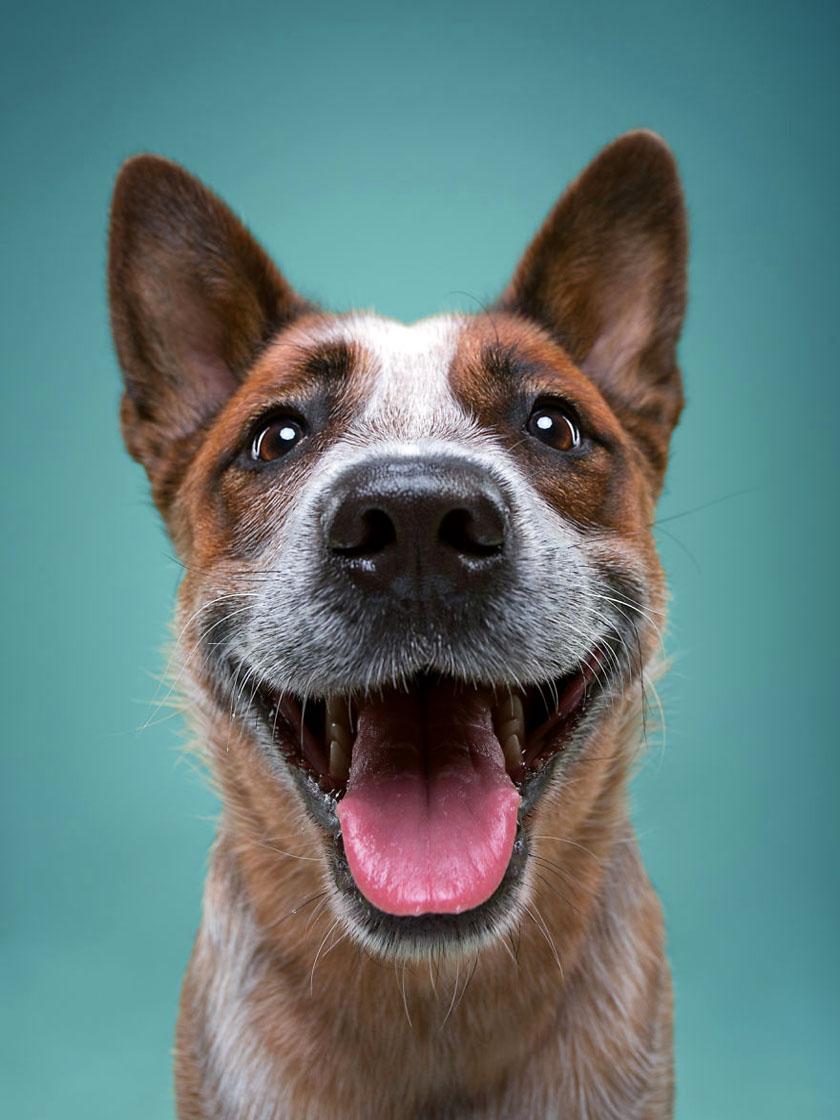 Картинки собака улыбается