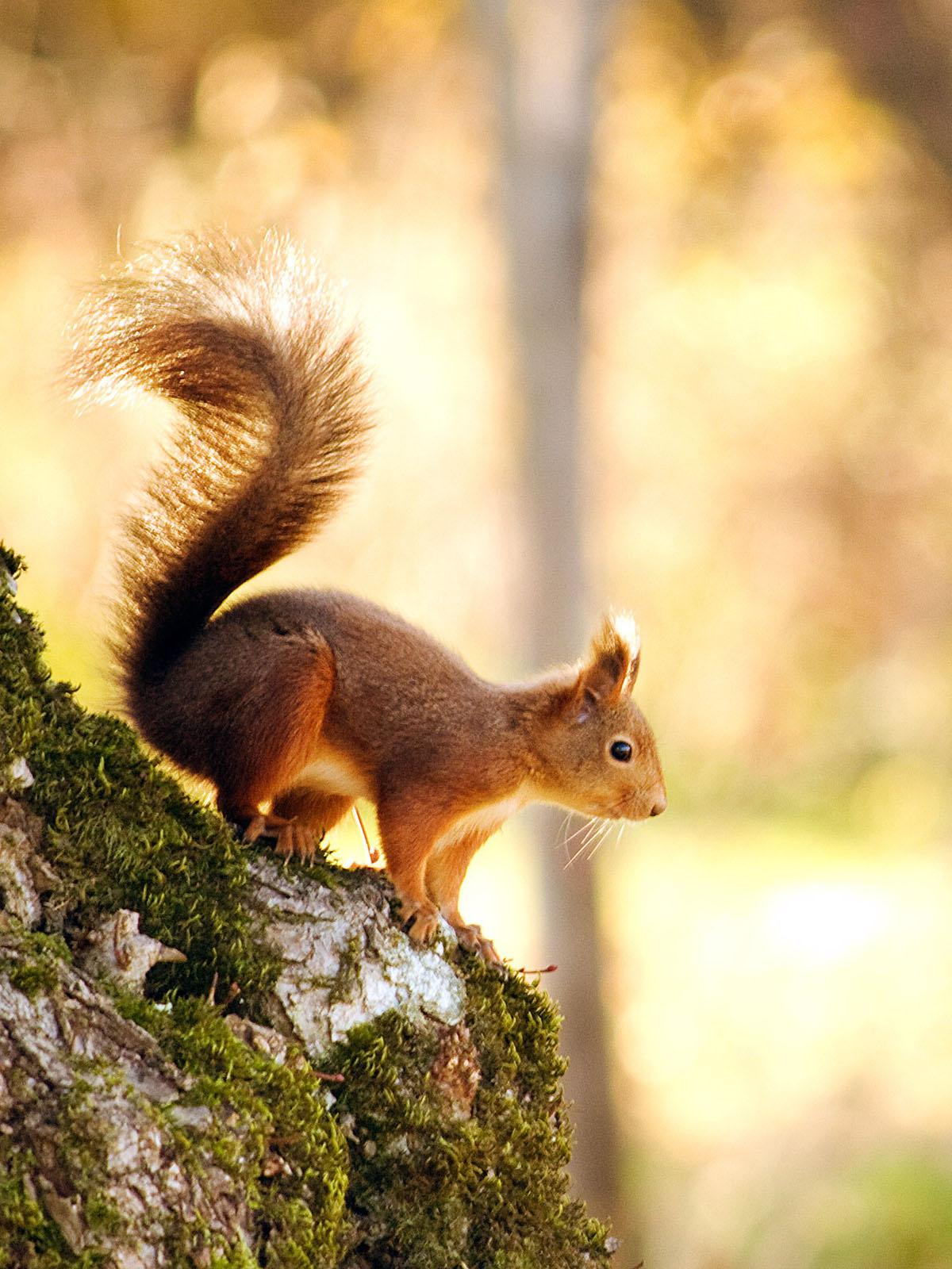 фото белки на дереве осень балдахином стоял золотой
