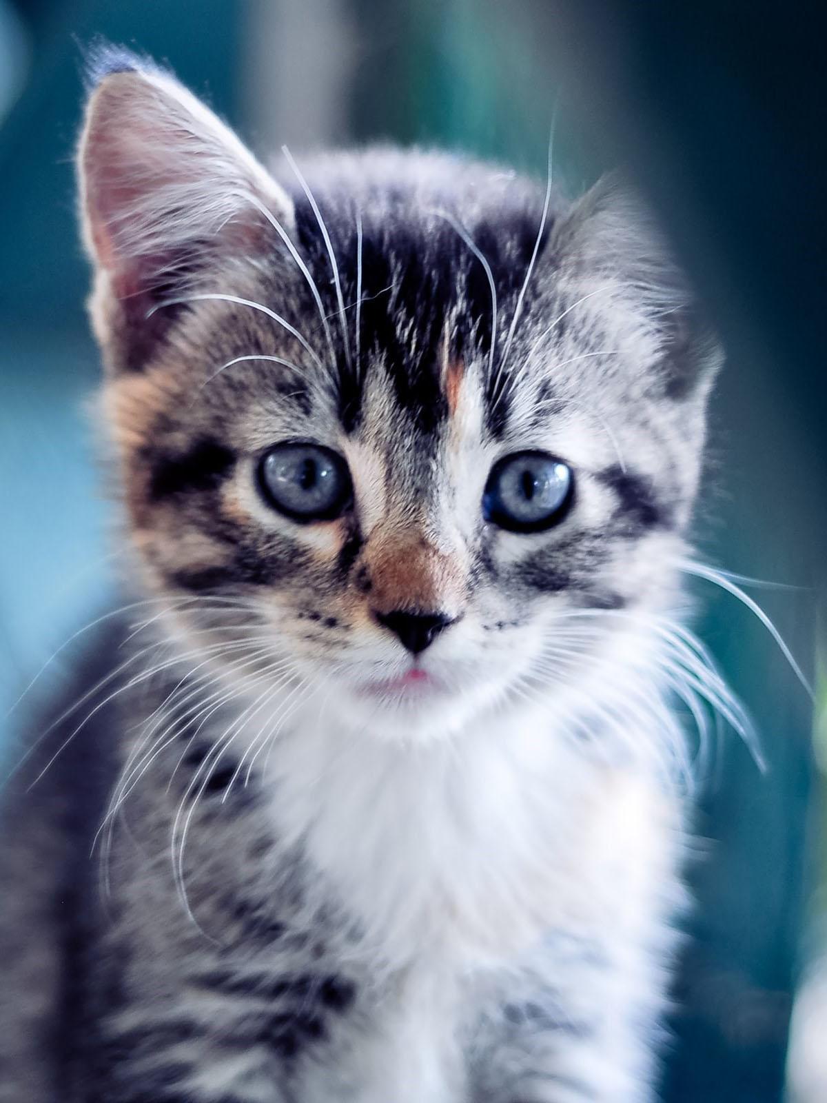 Открытки грустные котята рожь