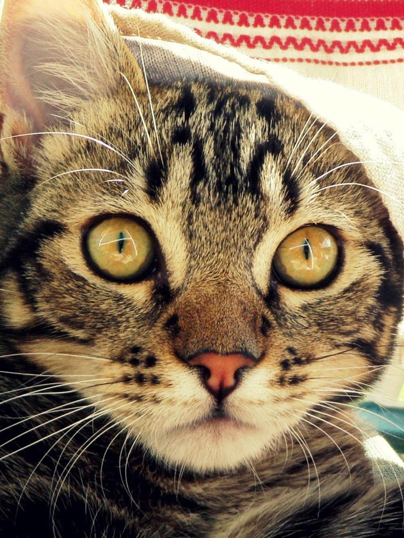 кот напуган картинки олицетворяет собой