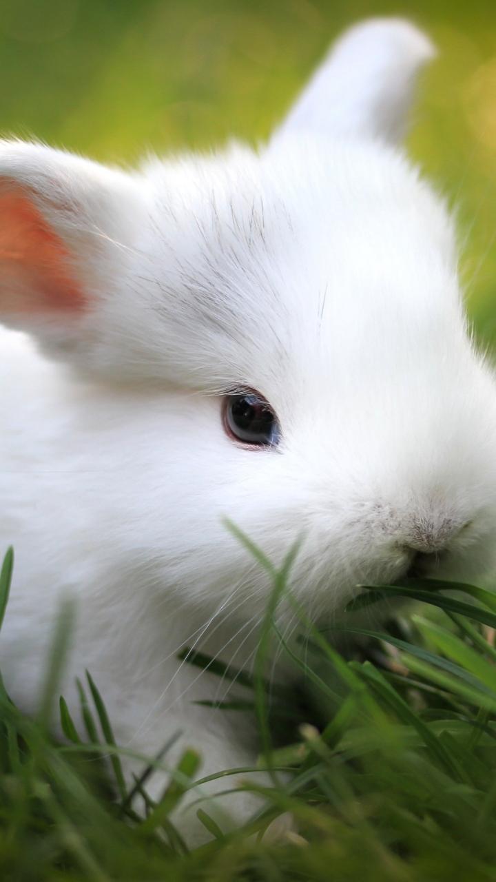 Открытка белые кролики