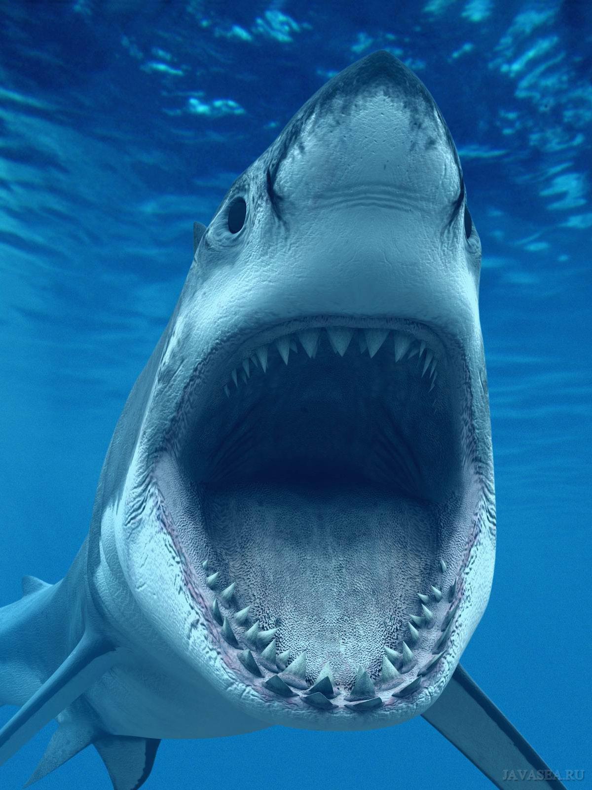 Акула с открытой пастью картинки