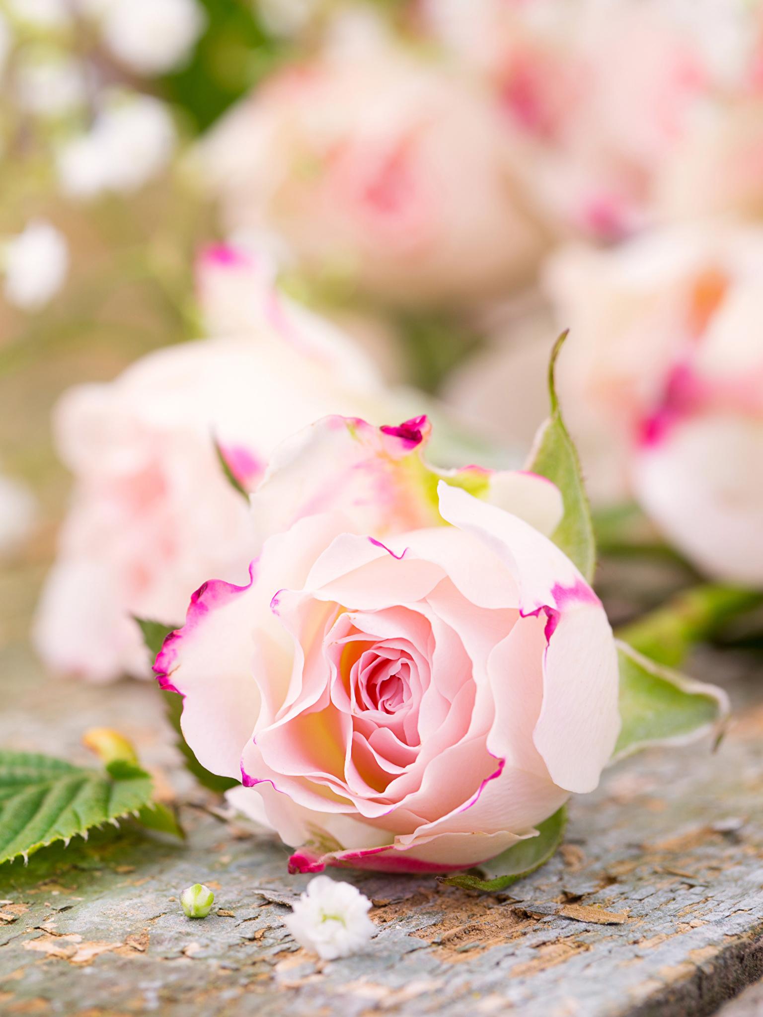 Картинка с нежными цветочками