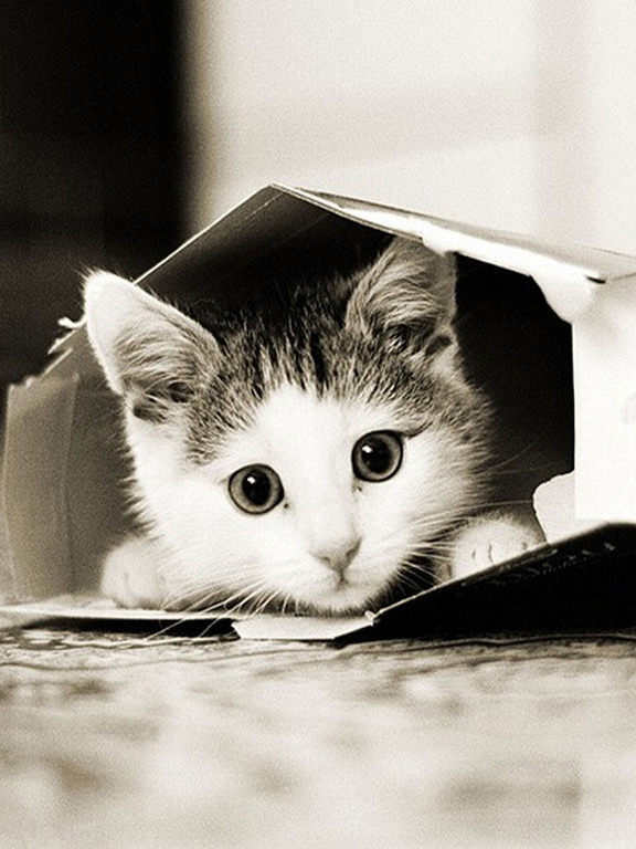 Скачать картинку Котенок в коробке бесплатно