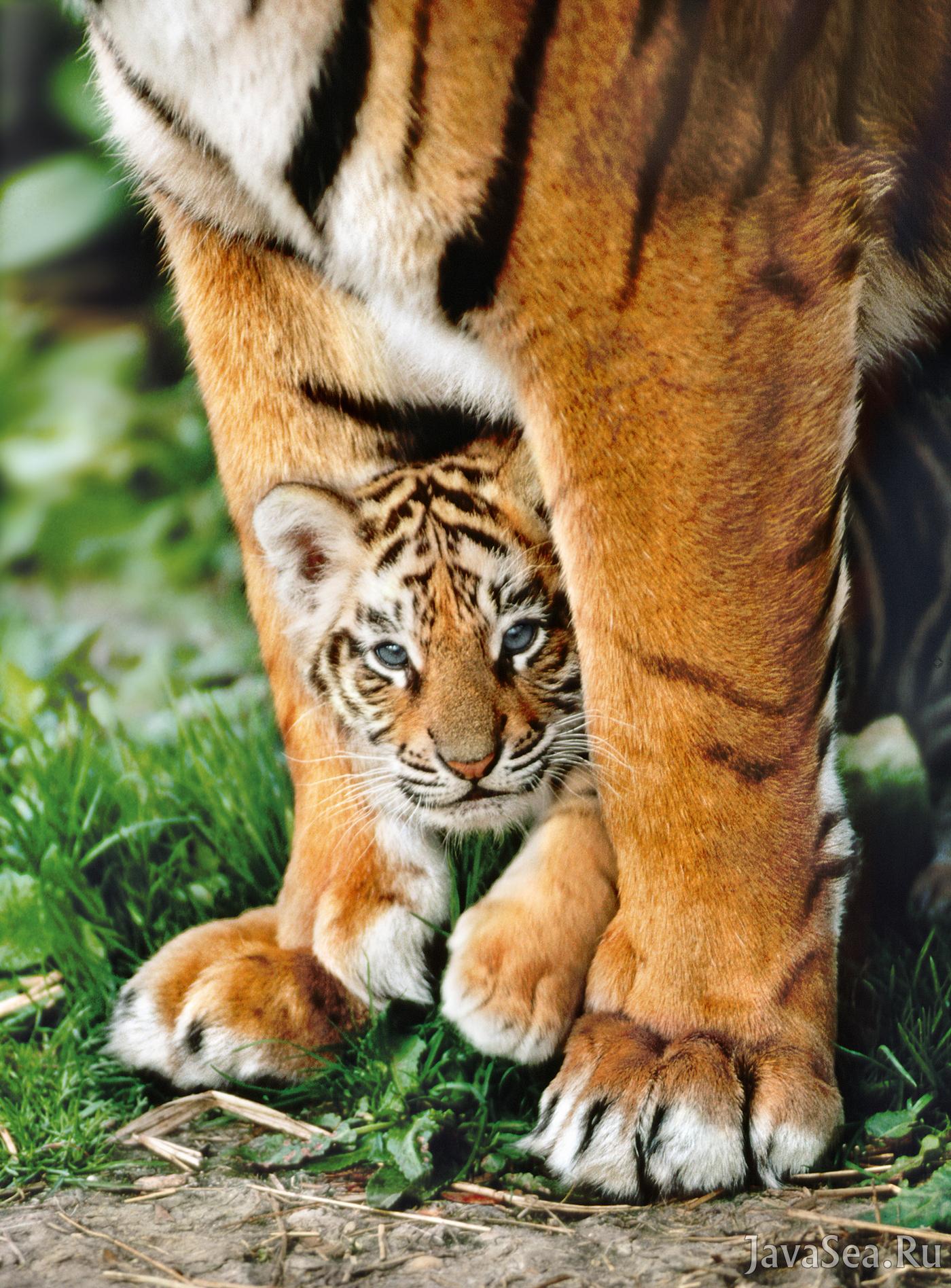 кто небезразличен красивые картинки на аву животные с детенышами то, что сейчас