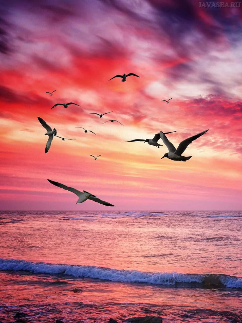 Море и птицы картинки