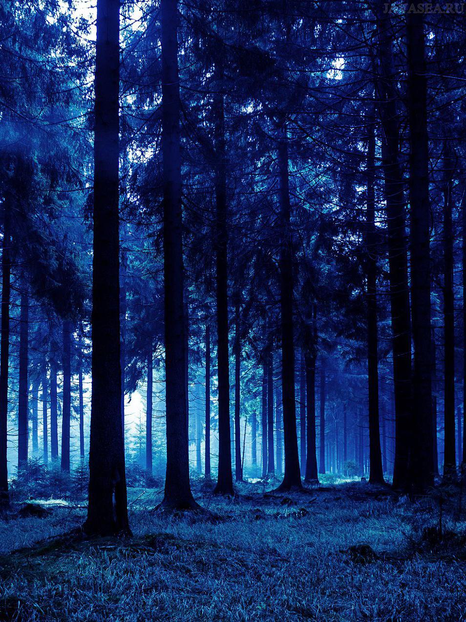 Скачать картинку Синий лес бесплатно